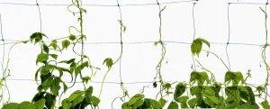 Δίχτυ στήριξης φυτών 1.2m ύψος ανά 1m