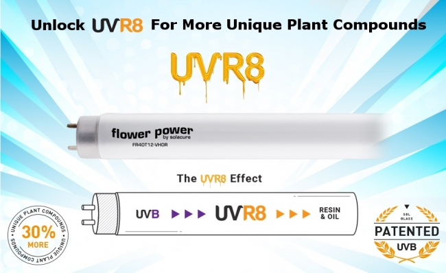 UVR8 Lamps